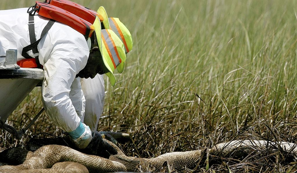 Clean-up workers rotate an absorbent boom to clean up the marsh west of Lake Felicity near Cocodrie, Louisiana, in 2010.
