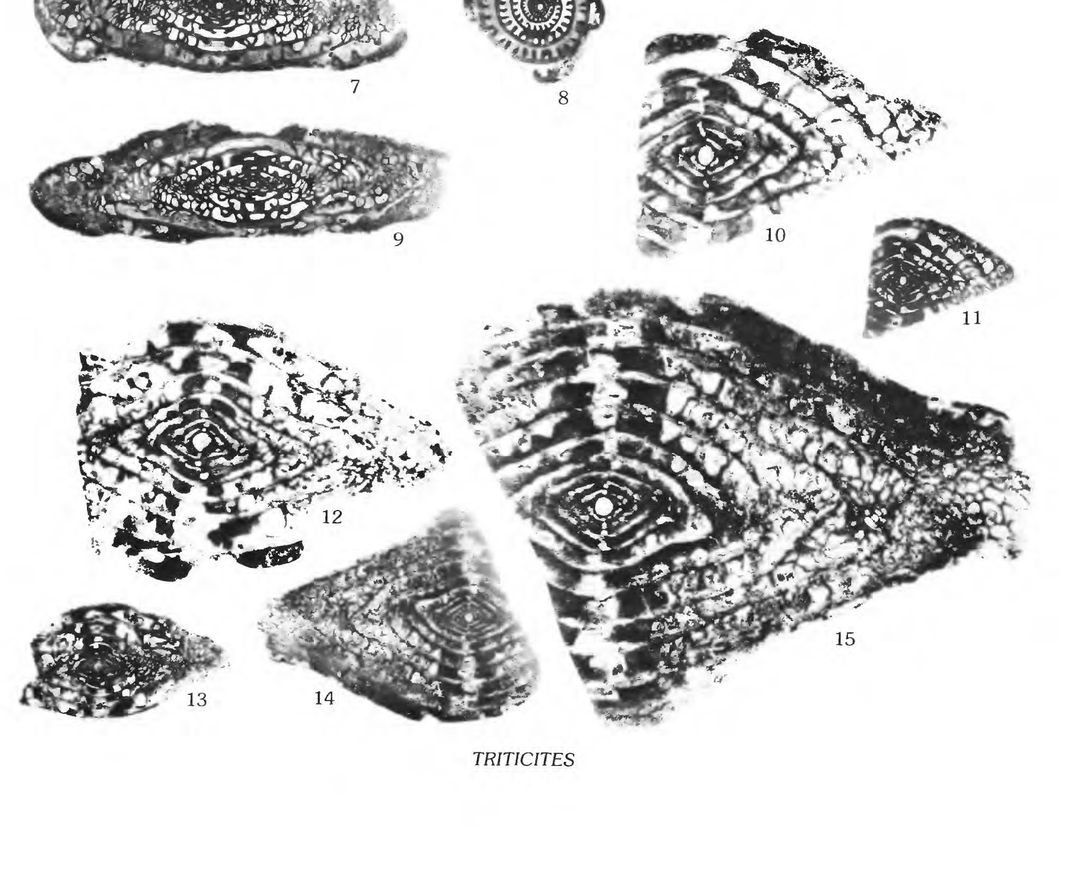 Microscope image of fossil marine organisms.