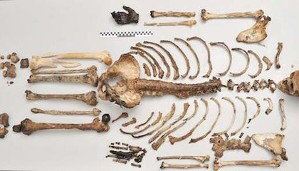 Hair and Eye Color Can Now Be Determined for Ancient Human Skeletons