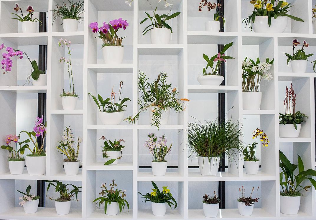 why orchids belong in an art museum at the smithsonian smithsonian