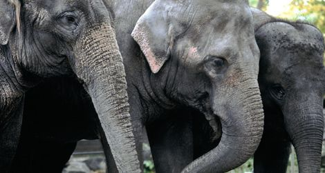 Three elephants will be coming to the National Zoo from Canada's Calgary Zoo in the spring.