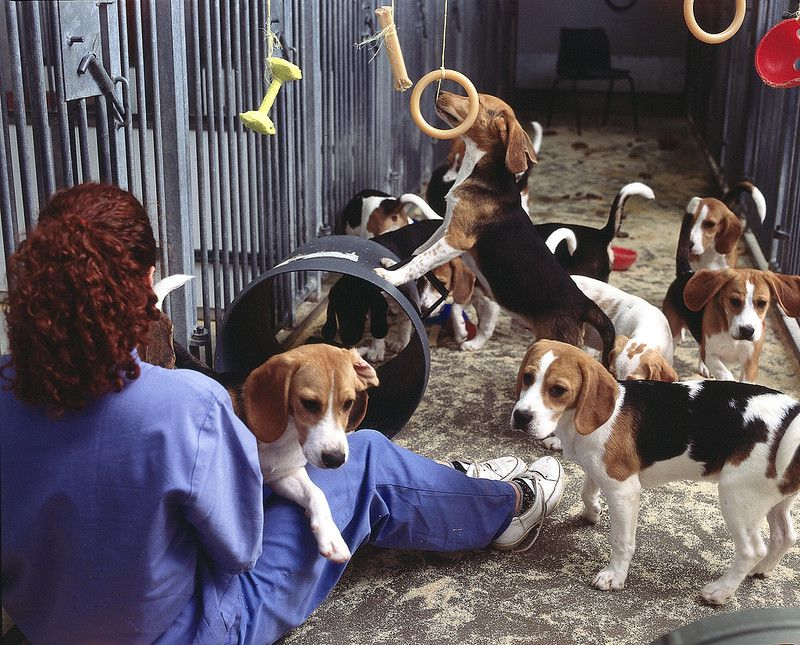 The FDA Will Now Allow Lab Animals to Be Adopted