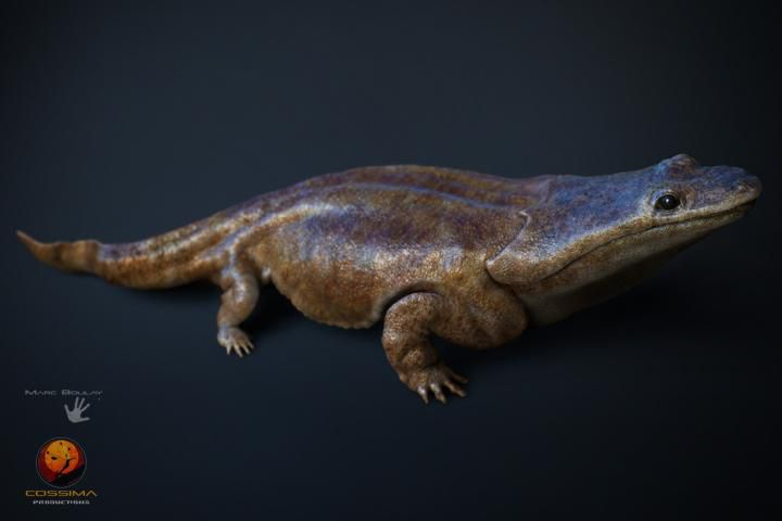 ancient salamander