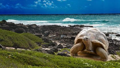 tailor-made-travel-galapagos