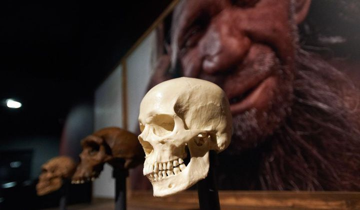 Early Human Ancestors Evolved Ability to Speak