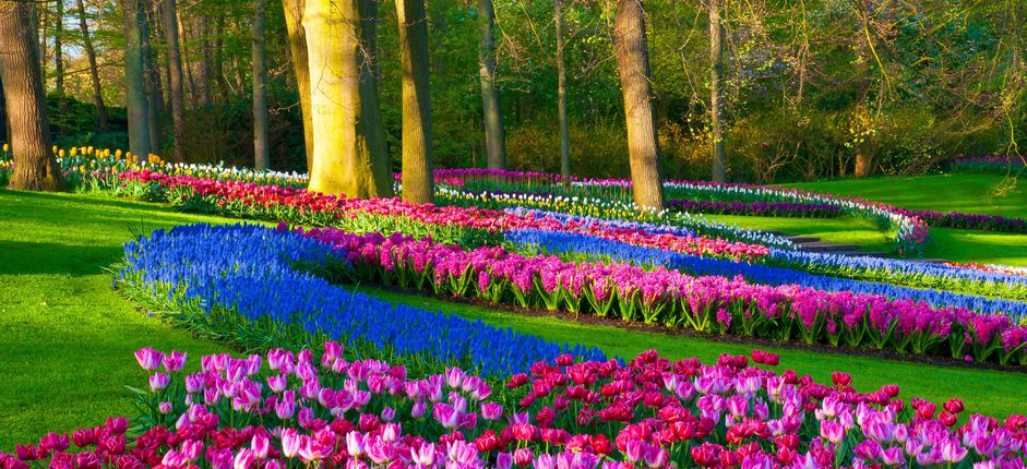 Waterways of Holland and Belgium <p>Enjoy a river cruise along the canals and waterways of Holland and Belgium as you take in their magnificent art collections, spellbinding gardens (including more than seven&nbsp;million tulips at Keukenhof Gardens), and enchanting medieval villages.</p>