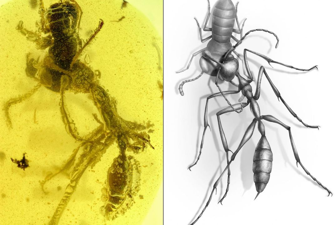 Amber Fossil Shows 'Hell Ant' Was Unlike Anything Alive Today | Smart News | Smithsonian Magazine
