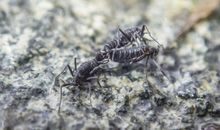 How Antarctica's Only Native Insect Survives the Freezing Temperatures