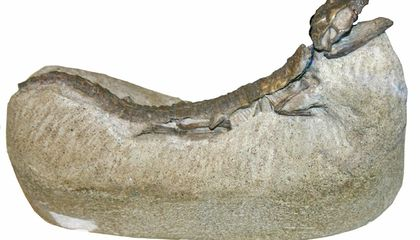 These Are Some of the Weirdest Ways Paleontologists Find Fossils