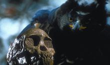 Taung skull and African crowned eagle
