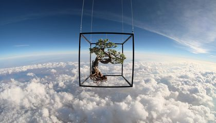 Artist Sends a Bouquet and a Bonsai to Space