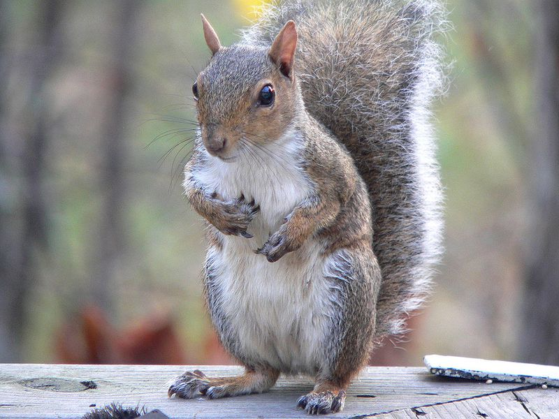Squirrels Eavesdrop on Birds to Check if Danger Has Passed