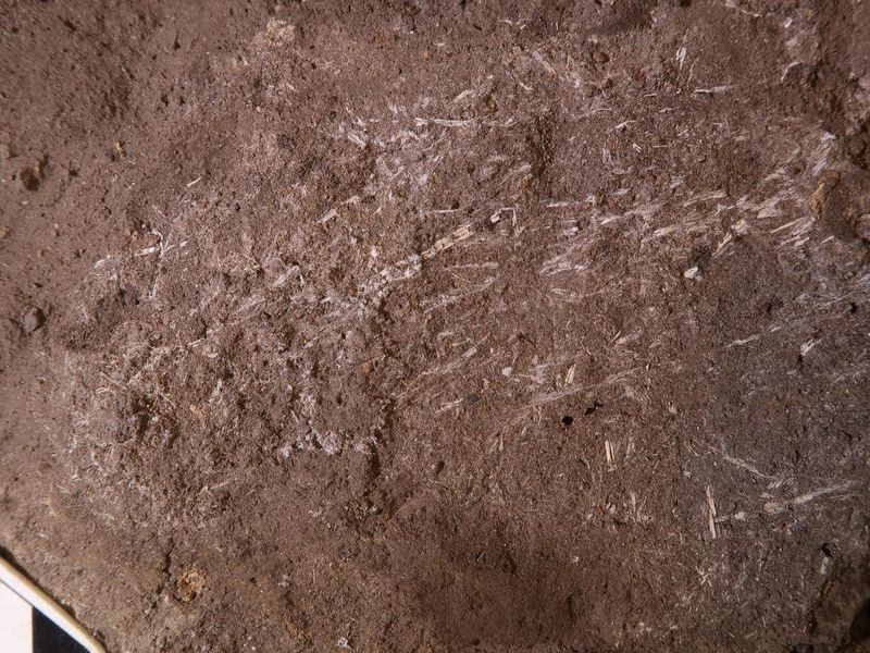 200,000-year-old bedding