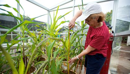 To Decode the Mystery of Corn, Smithsonian Scientists Recreate Earth as it Was 10,000 Years Ago