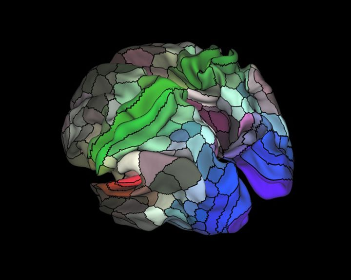 New brain map doubles number of known regions smart news smithsonian brain map 2 ccuart Choice Image