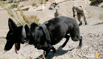 The Best Way to Find IEDs?