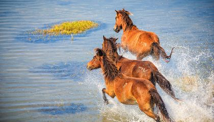 The Best Places to See Wild Horses in North America