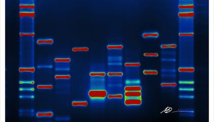 Junk DNA Isn't Junk, and That Isn't Really News