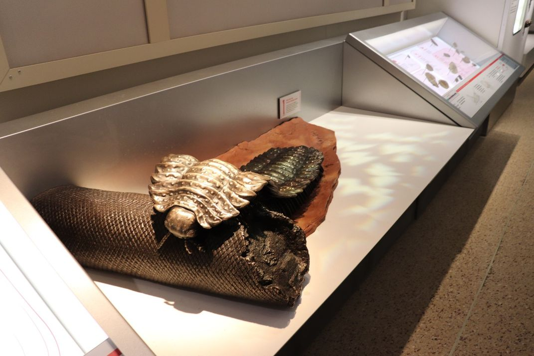 A bronze statue of a millipede crawling over a fallen tree on a white display shelf in the Smithsonian's fossil hall.