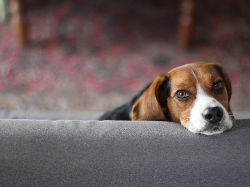 Doggonit Genes That Make Fido Human Friendly Also Linked To Mental