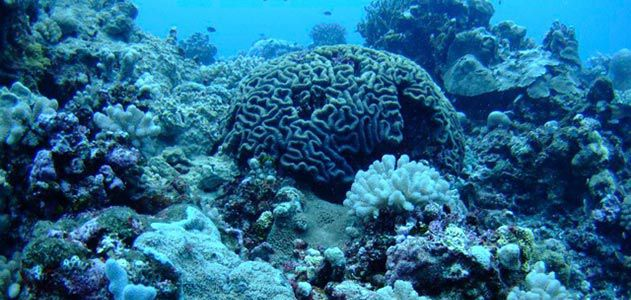 Coral and benthic communities at Maug Island