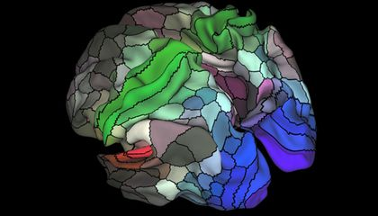 New Brain Map Doubles Number of Known Regions