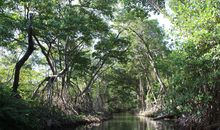 Together, We Can Save the Mangroves