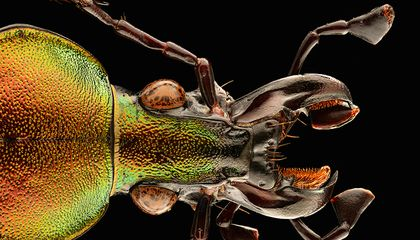 Eek! Each of These Insect Portraits Is Made From More Than 8,000 Images