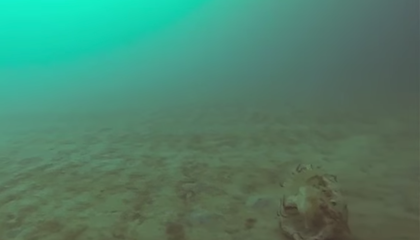 Surprising Footage Captures Arctic Jellyfish Lurking Under the Ice