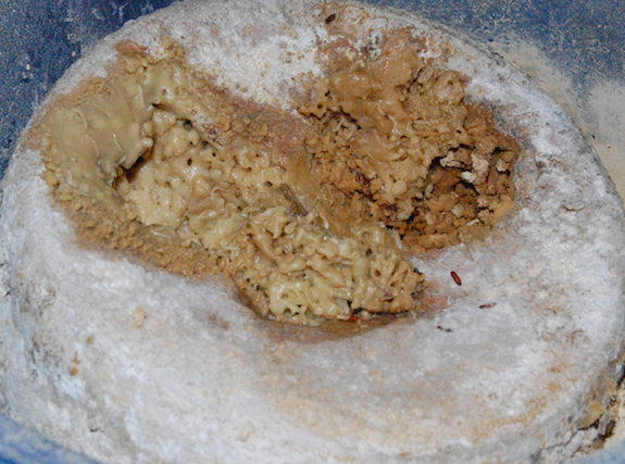 This enticing hunk of casu marzu cheese is rich with fly larvae, but sadly, illegal in the United States.