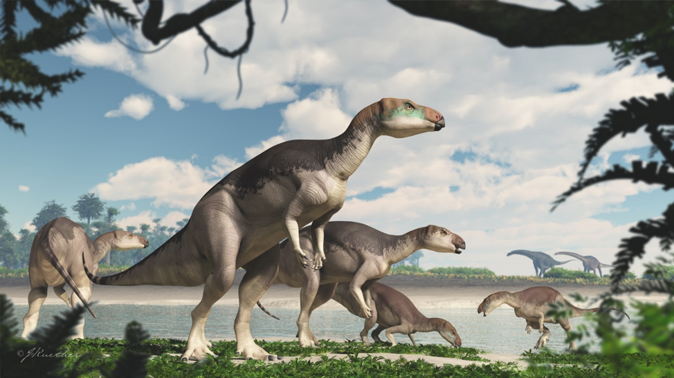 Dinosaur Bones Shimmering With Opal Reveal A New Species In Australia Science Smithsonian Magazine