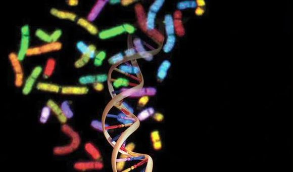 Preview thumbnail for video'The Human Genome: Unlocking Life's Code