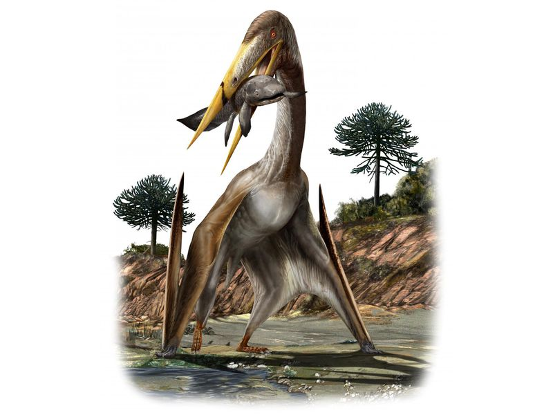 An illustration shows a pterosaur standing in water holding a large fish in its beak