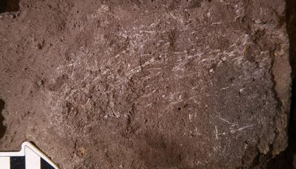 200,000-Year-Old Bedding Found in South Africa May Be World's Oldest