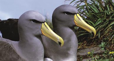 albatross species