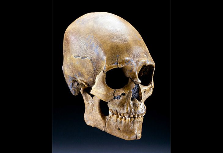 Kennewick Man Skull