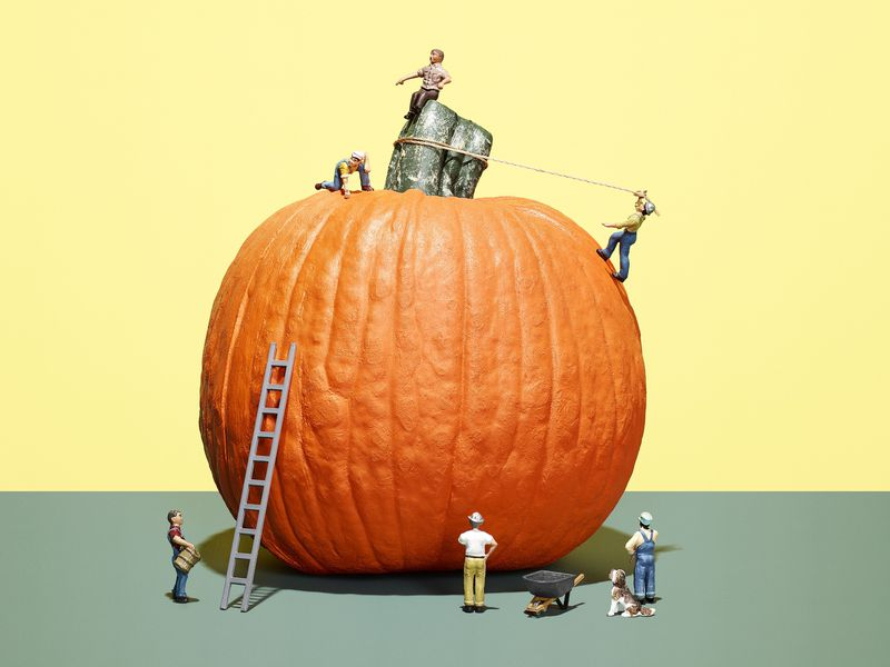 The weight of record-setting giant pumpkins has ballooned nearly 500 percent since 1975.