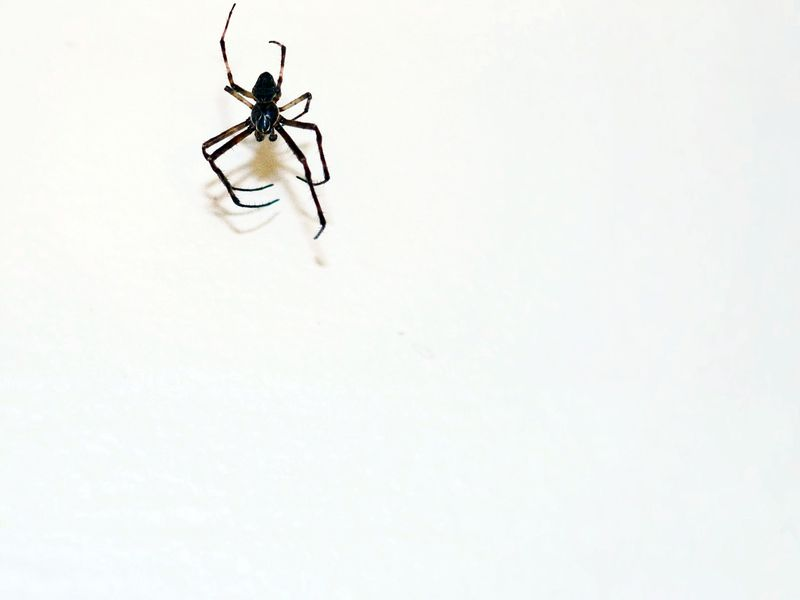 Spiders Seem To Be Getting More >> Arachnophobes Think Spiders Are Bigger Than They Really Are Smart