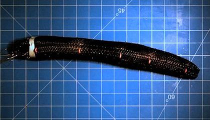 Scientists Create Worm-like Robot That Can Inch Along the Ground