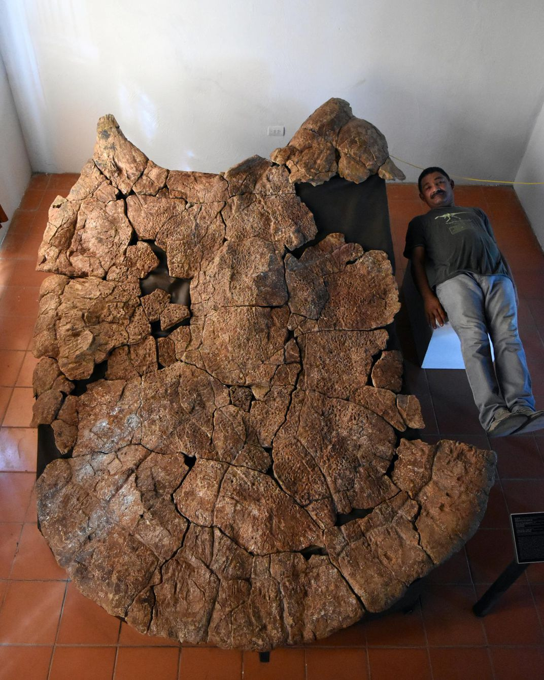 Man lays down next to 10-foot turtle shell fossil