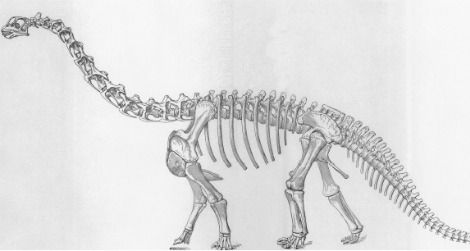 Camarasaurus, as envisioned by Erwin Christman
