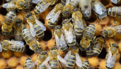 What Happens When 20 Million Bees Are Set Loose In A Highway Accident