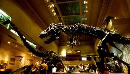 Cast Your Vote for the #1 Dinosaur Museum