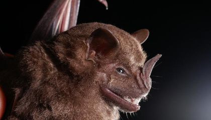 Ancient Bat Guano Reveals Thousands of Years of Human Impact on the Environment