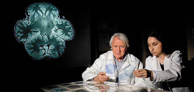 John Allman and Atiya Hakeem examing elephant brain specimens