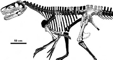 A skeletal restoration of Smok wawelski