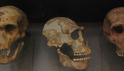 New Study Suggests Humans, Not Climate, Killed Off Neanderthals