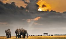 African Safari photo