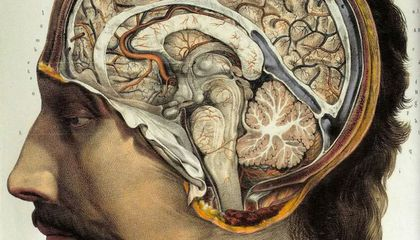 Your Brain Swells—Then Deflates—While You Learn