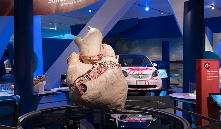 The World's First Preserved Blue Whale Heart